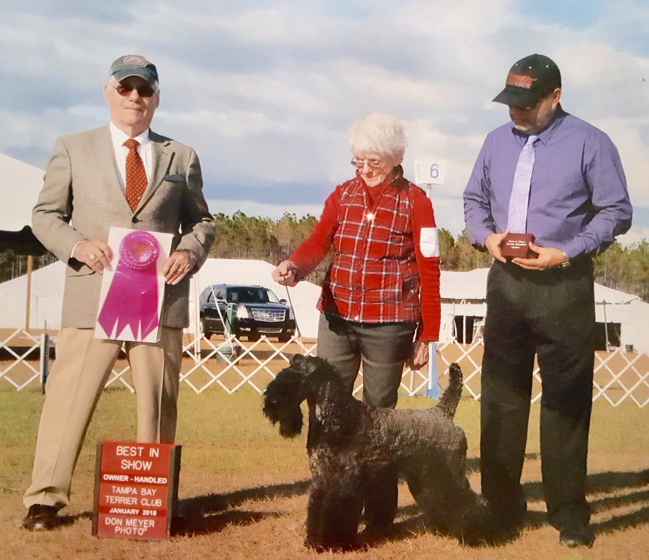 Kerry Blue Terrier Best in Show